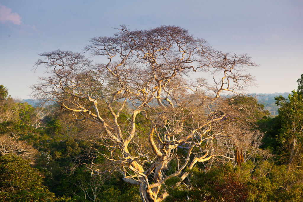 Primary tropical forest as seen from a canopy tower in Tambopata