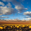 Bolivia: Altiplano Salt Flats, Volcanoes & Badlands – 14 Days