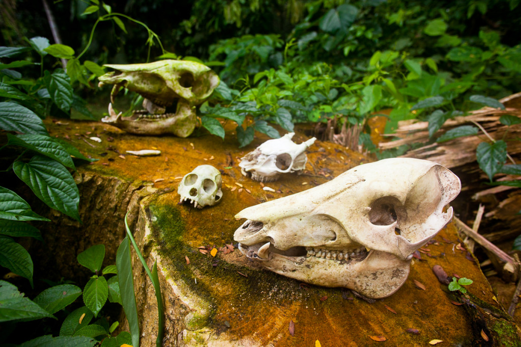 Skulls of various mammals are displayed outdoors at a lodge in T