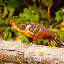 Bolivia: Madidi National Park & Wildlife at Chalalan Lodge (7 Days)