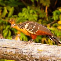 Bolivia: Madidi National Park & Wildlife at Chalalan Lodge (7 Days)