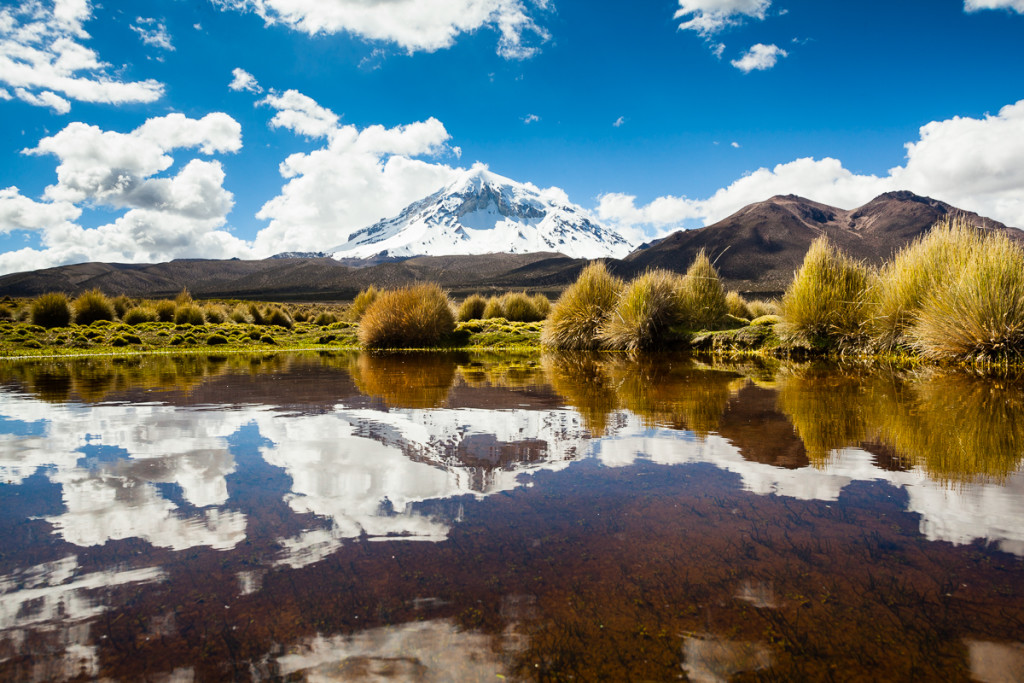 Mt. Sajama rises above the Altiplano's puna grasslands and wetla