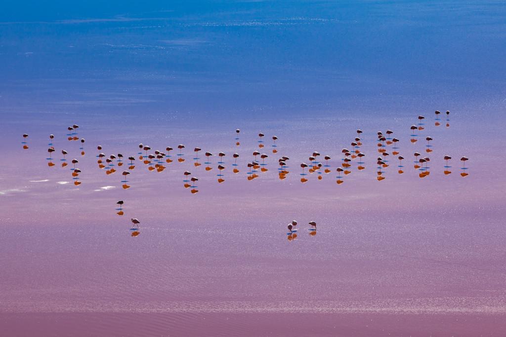120430_LagColorada_Flamingos_331