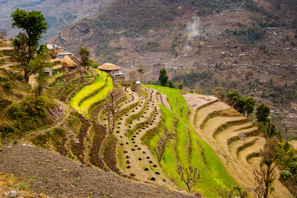 A typical farm on the steep hillsides of the Himalaya foothills show different terraces with harvest-ready crops and some with piles of buffalo manure ready to be planted before the monsoon season begins, near the village of Landruk, Nepal.